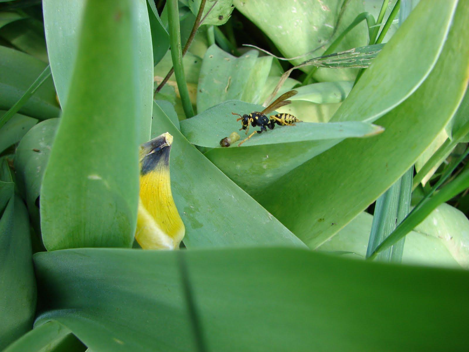C'est dans mon jardin: MINUTE MAI 2011 n30 : Tout ce que ...