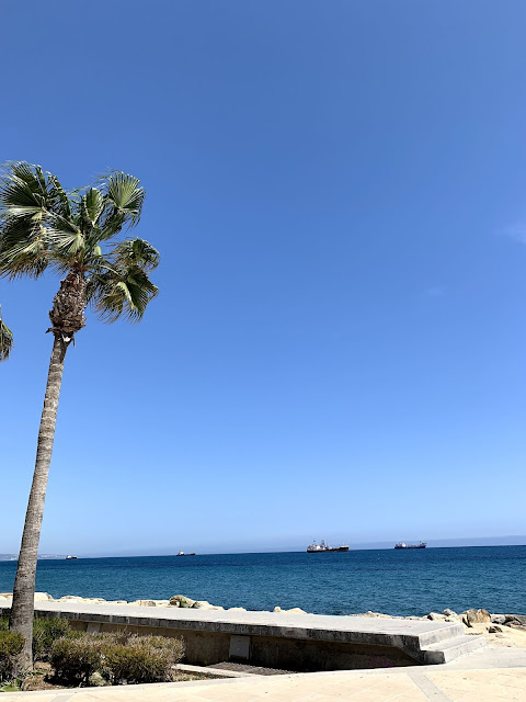 blue sky, palm tree and ocean view