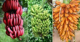 banana peel uses
