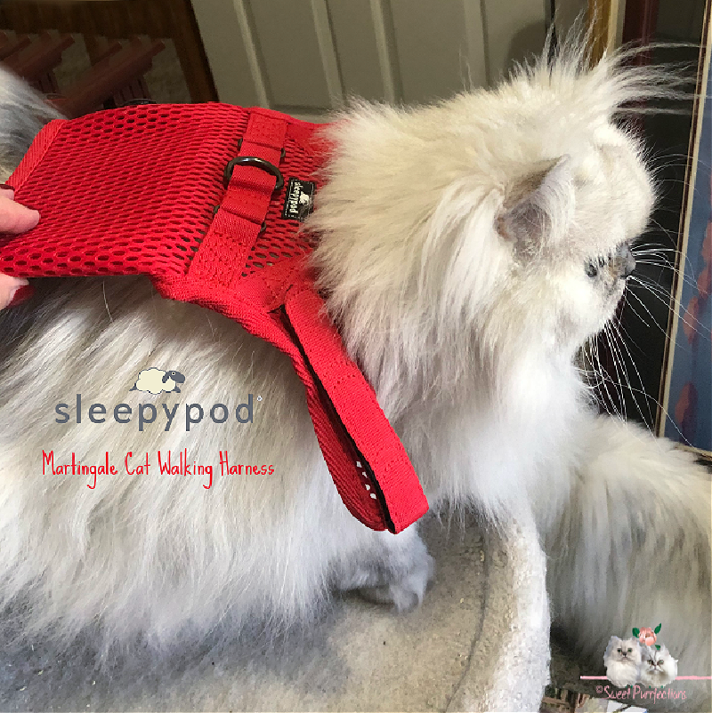 Red Sleepypod Martingale Harness on back on silver shaded Persian cat