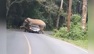 Gajah tindih mobil sedan