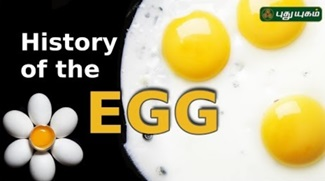 History of eggs – Where did eggs come from?