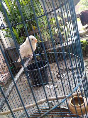 Forum Hobi Burung