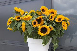 sunflower-878825__340.jpg