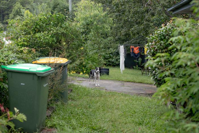 joop in garden