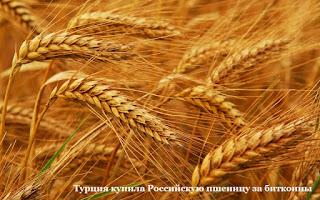 Турция купила Российскую пшеницу за биткоины
