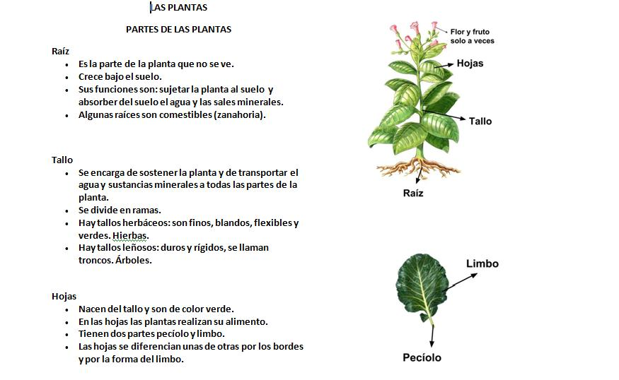 Maestra de Primaria: Esquema del tema de las plantas. Partes de la ...