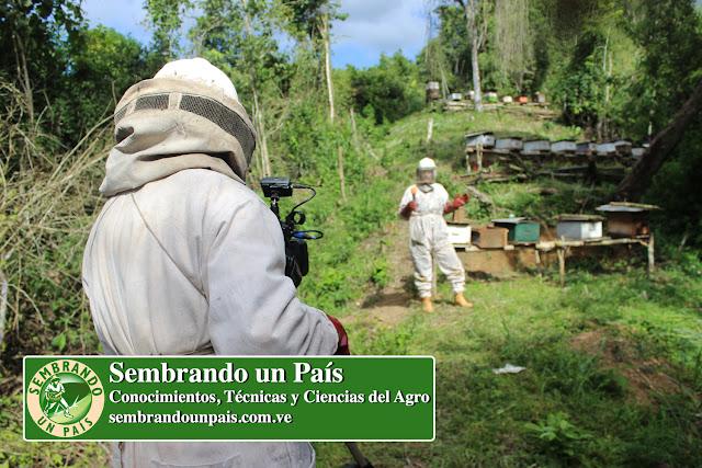 apicultores en apiario