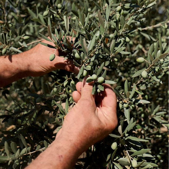 Cosmética ecológica certificada con aceite de oliva