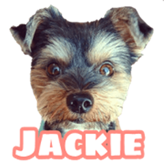 awesome puppy Jackie