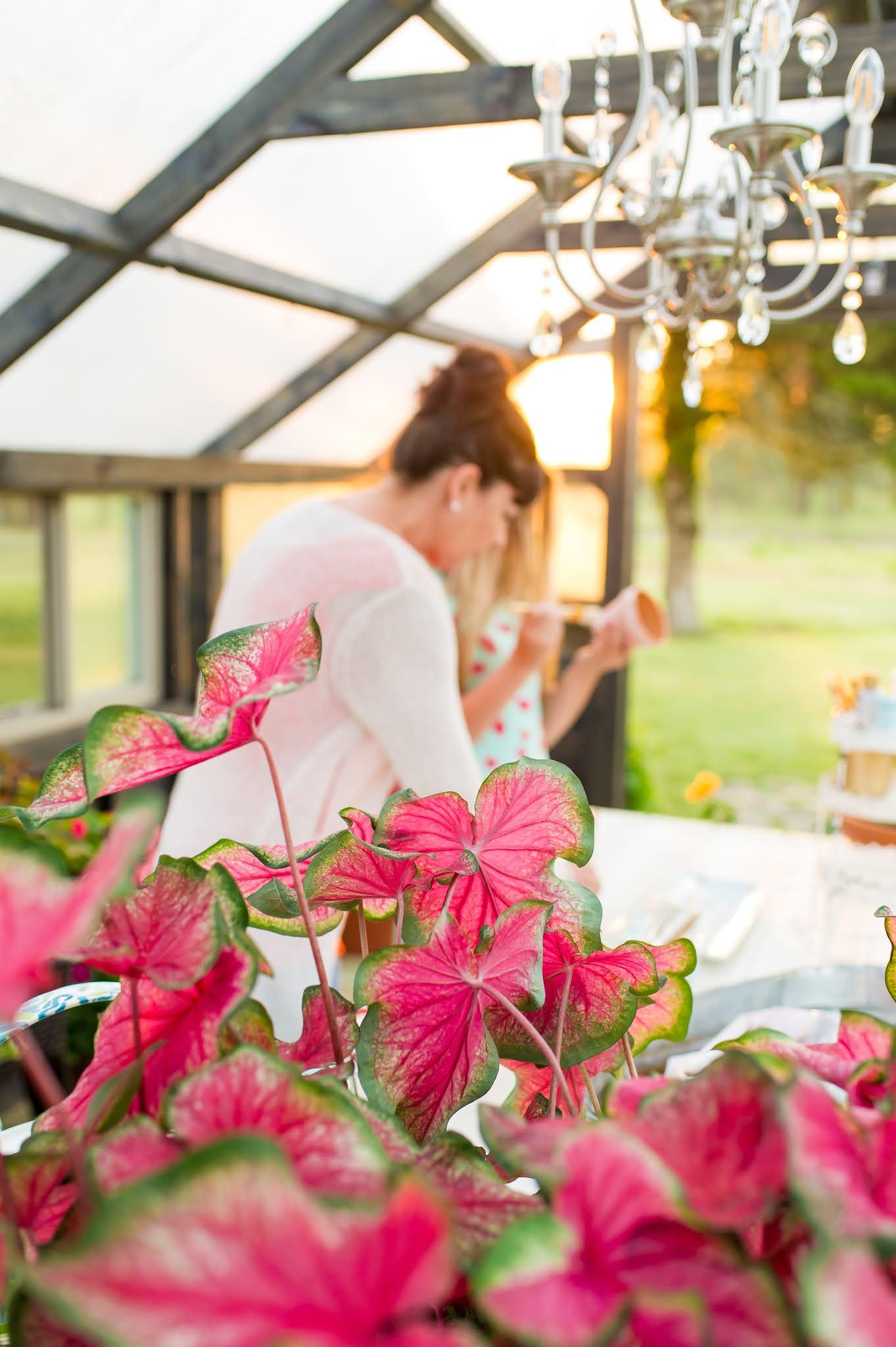 Yoderbilt Greenhouse Sunrise