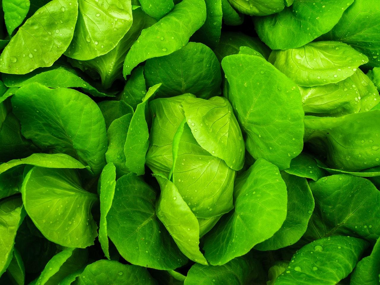 Makanan yang mengandung serat - sayuran