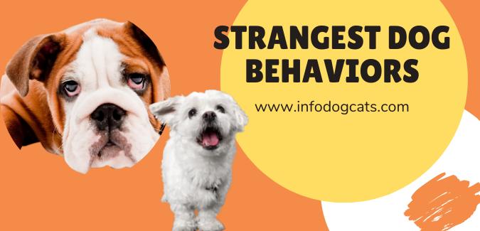 Strangest Dog Behaviors