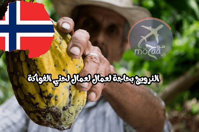 النرويج بحاجة لعمال مزارع 2019