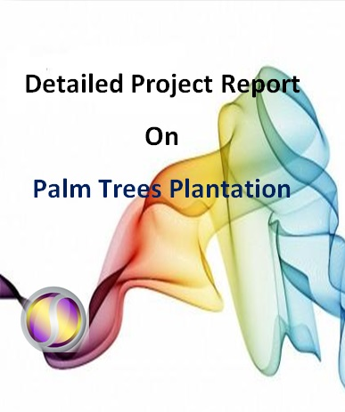 Project Report on Palm Trees Plantation