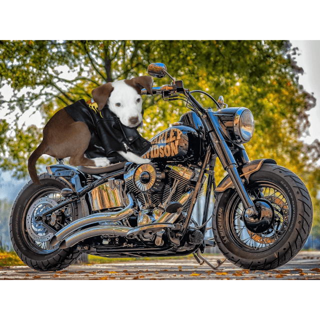 Biker Puppy