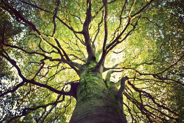 Berapa banyak pohon yang masih hidup