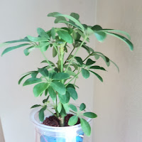 観葉植物の写真