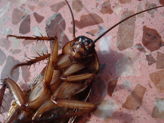Scientists Explain Why You Can't Get Rid of Cockroaches