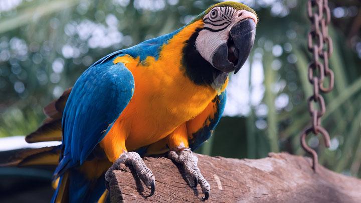 parrot target training