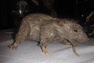 Murdoch Mr. Rat