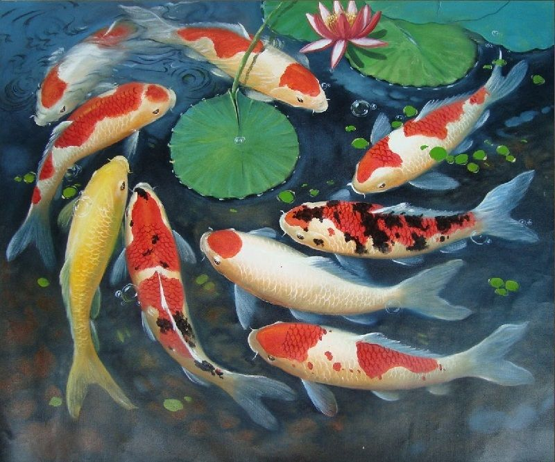 Gambar Lukisan Ikan Koi Yang Cantik Dan Indah