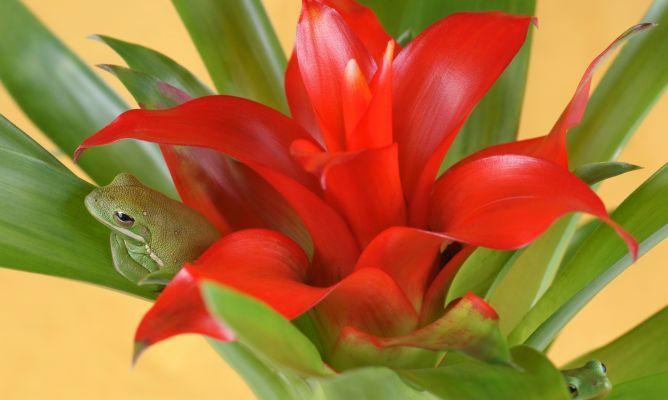Cultivo de las Bromelias - Jardineria