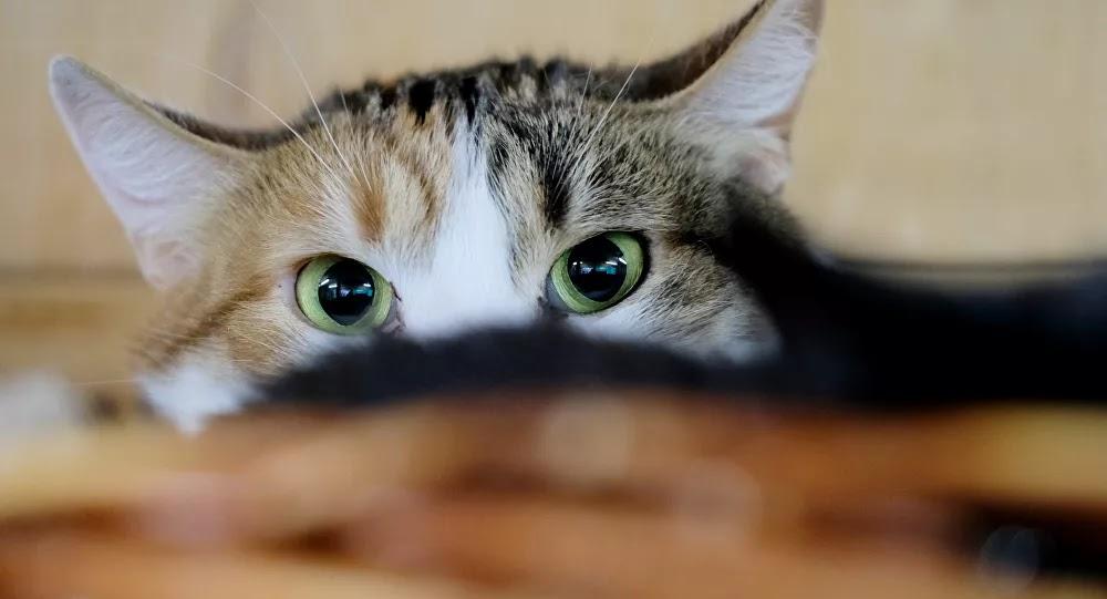 بالفيديو: كاميرات المراقبة تصدر إنذارا بعد رصدها شبح قطة ماتت قبل أسابيع