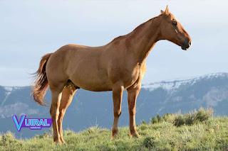 Contoh Hewan Vivipar Kuda