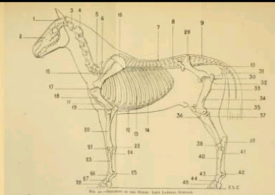 Download Artistic anatomy of animals by Edouard