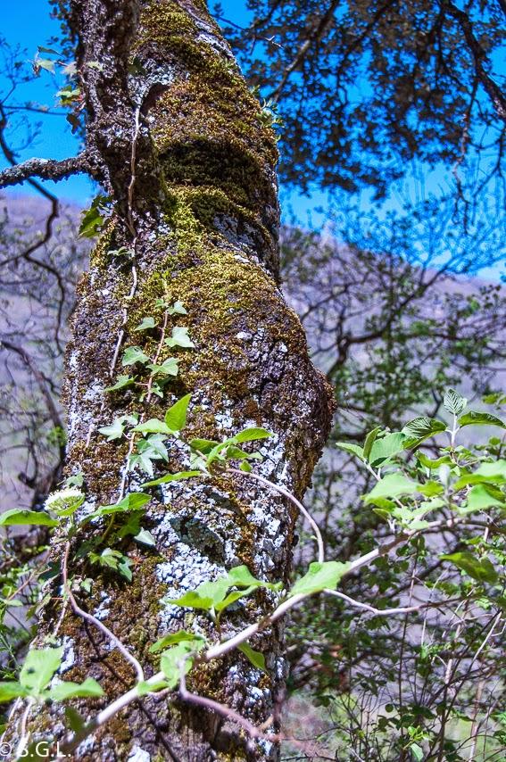 Detalle de la naturaleza en el nacedero del Urederra en la sierra de Urbasa