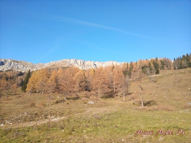 Brunnalm, Hohe Veitsch, Steiermark, Austria