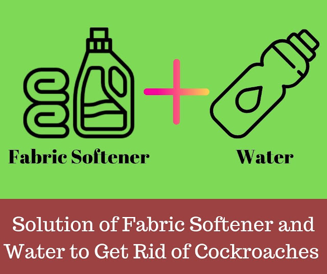 Get rid of roaches in apartment with Solution of Fabric Softener and water