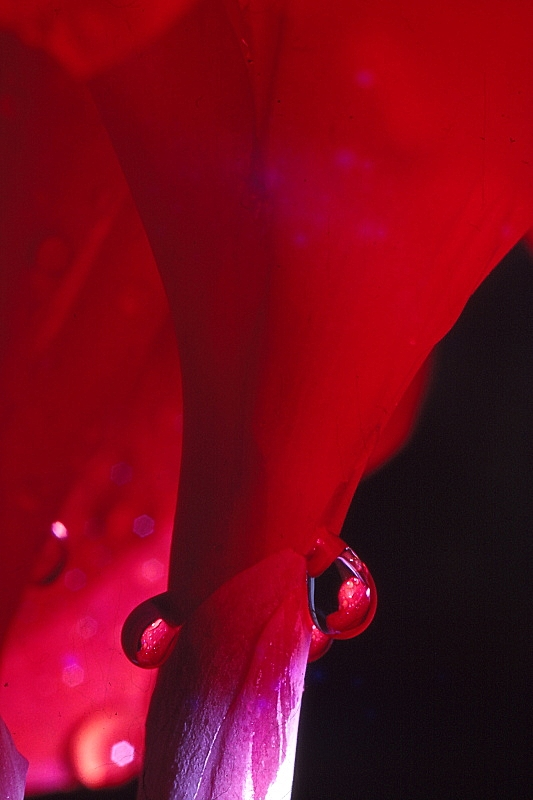 Found Slides, Shades of Red 04