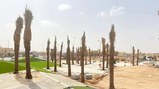 Decision to ban the cultivation of Palm Trees in Gardens and Roads, More details revealed - Saudi-Expatriates.com