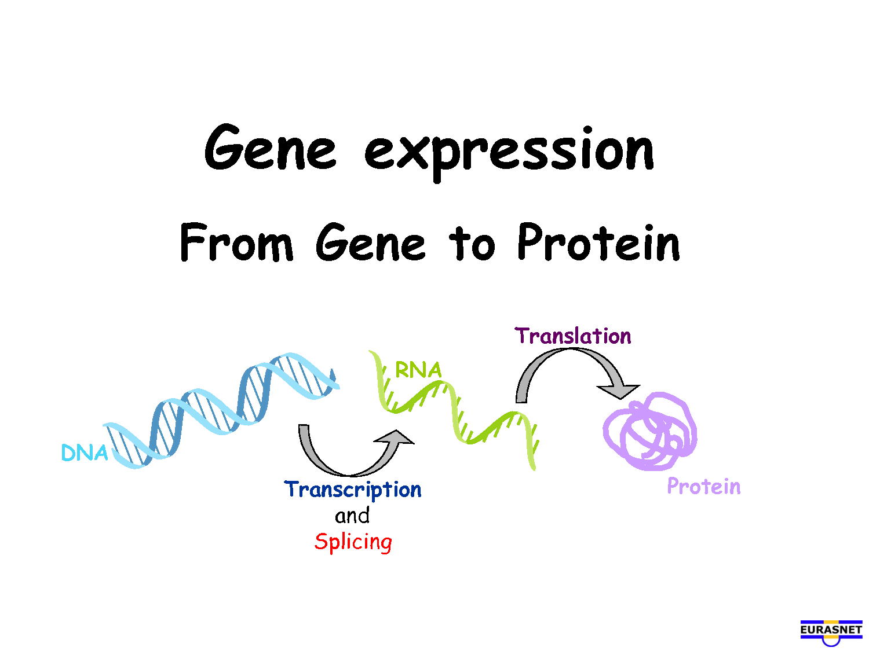 Biological-Freak: 去氧核醣核酸(DNA)的結構與功能 2013年11月12日