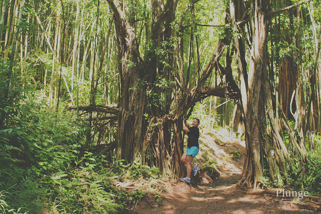 Hike at Manoa falls