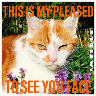 Angry Amber @BionicBasil® Bad Tempered Kitty - This IS My Pleased To See You Face