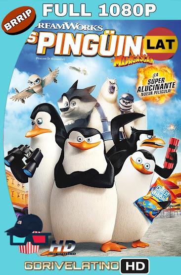Los Pingüinos de Madagascar (2014) BRRip 1080p Latino-Ingles MKV