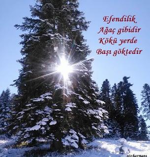 ağaç, altın sözler, baş, beyefendi, efendi kime denir, efendilik nedir, en güzel söz, hanımefendiliğin altın kuralları, özlü sözler, resimli sözler, efendiliğin kuralları