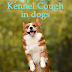 Kennel cough in dogs: causes and symptoms