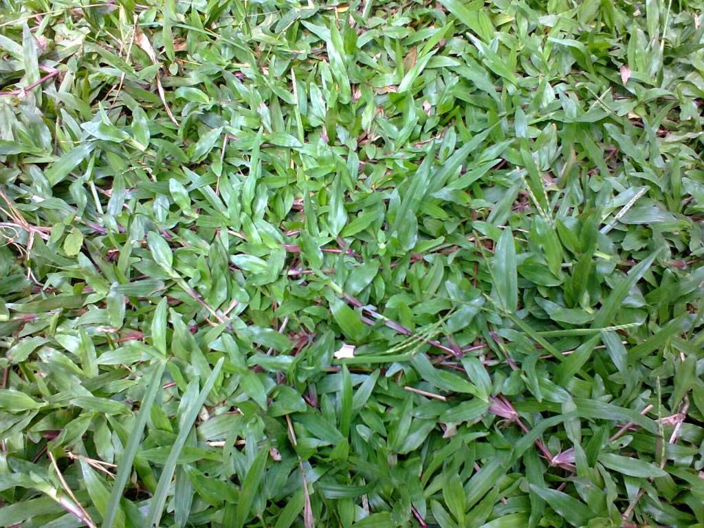 http://tukangtamankaryaalam.blogspot.com/2014/12/tukang-rumput-tukang-tanam-rumput.html