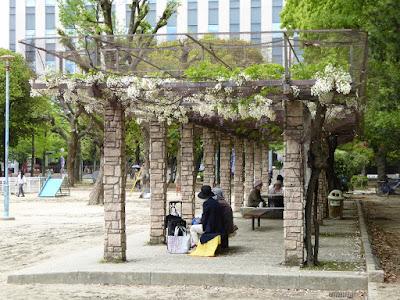 下福島公園の藤棚 のだふじ