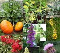 Désintoxic le corps à plantes médicinales
