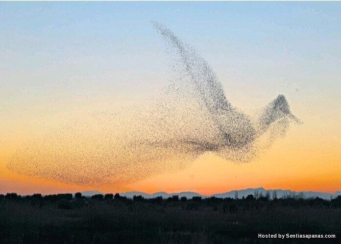 Gambar Formasi Burung Gergasi Yang Menakjubkan Berjaya Dirakam!