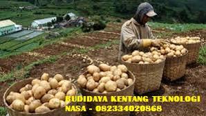 BUDIDAYA KENTANG TEKNOLOGI NASA - 082334020868