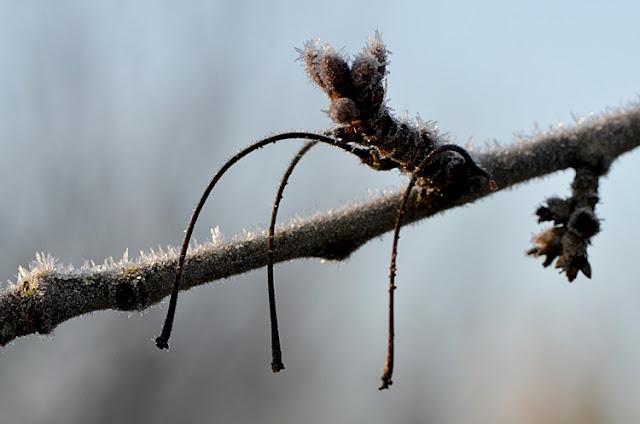 branche glace givre jardin hiver
