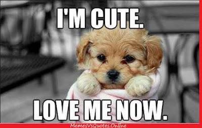 Cute Love Memes