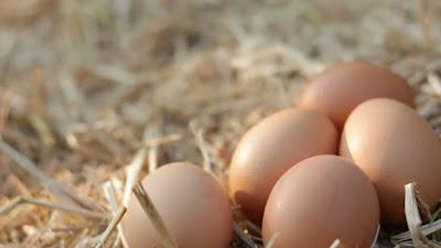 Goatchi - Kadaknath Chicken Eggs Benefits