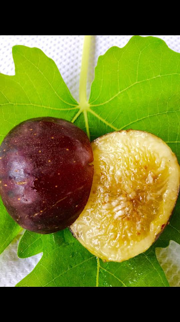 EARLY VIOLET Figs